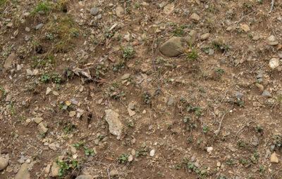 Raw-Dirt